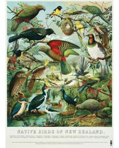 Native Birds of New Zealand - John Keulemans