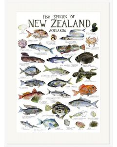 Fish Species of NZ Poster - Giselle Clarkson