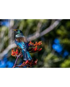 Tui Colours - Sandy Abbot