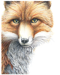 Grace the Fox - Wild Honey Art