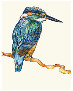 Kingfisher - Wild Honey Art