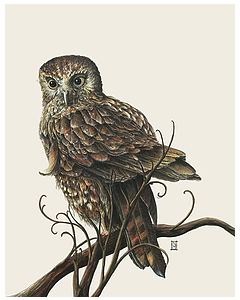 Light Morepork - Wild honey Art