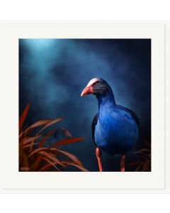 Pukeko On The Prowl - Julian Hindson