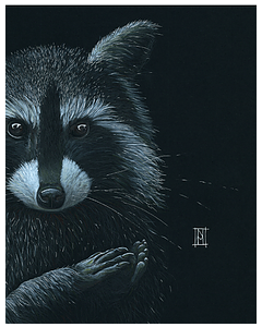 Raccoon - Wild Honey Art
