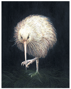 White Kiwi - Wild Honey Art